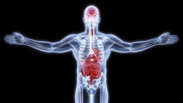 Actualités Equilibre de Vie - L'Ayurvéda restaure naturellement la santé de la flore intestinale